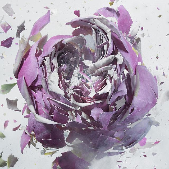 High Speed Flower Explosions by Martin Klimas