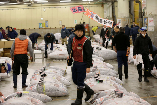 Prospective buyers inspect the quality of frozen tuna fish before the first auction of the year at Tsukiji fish market in Tokyo, early Thursday, January 5, 2017. (Photo by Eugene Hoshiko/AP Photo)