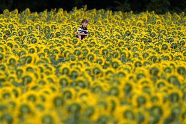 A boy gets a ride on a man's shoulders as they walk through a sunflower field at Grinter Farms, Monday, September 6, 2021, near Lawrence, Kan. The field, planted annually by the Grinter family, draws thousands of visitors during the weeklong late summer blossoming of the flowers. (Photo by Charlie Riedel/AP Photo)