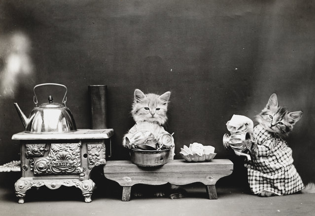 Photograph shows two kittens wearing clothes and washing dishes, 1914. (Photo by Harry Whittier Frees/Library of Congress)