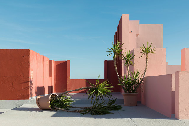 "Still life category, open shortlist. ""Palm trees routine"" was shot during a visit to the Muralla Roja residential complex in Alicante, Spain. (Photo and caption by Andrés Gallardo Albajar/2017 Sony World Photography Awards)"