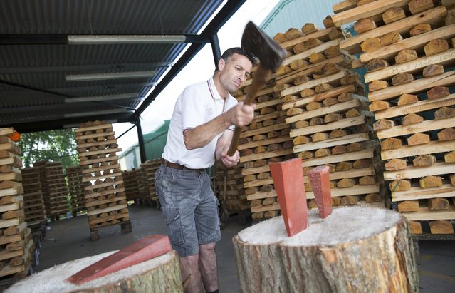 A worker demonstrates the traditional method of splitting logs into clefts at J S Wright & Sons cricket willow suppliers in Chelmsford, Britain July 6, 2015. J S Wright & Sons are the oldest and largest willow supplier, supplying English Willow to bat makers across the globe. The company sells 420,000 cricket blades from up to 10,000 willow trees per year. (Photo by Neil Hall/Reuters)