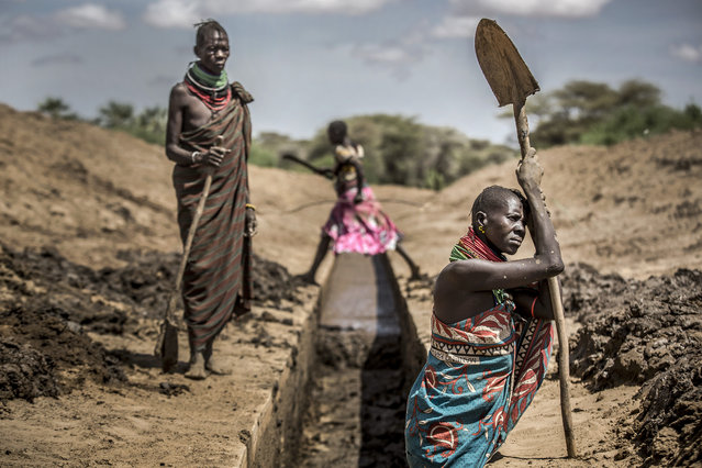 Members of the Turkana community work unblocking an irrigation canal to provide water to their sorghum crops in an arid dry area in Nanyee, near Lodwar, Turkana County, Kenya, on October 1, 2019. Turkana is a vast, dry area in the north-west of Kenya that is on the frontline of climate change. With regular searing temperatures the Turkana people are suffering from recurring and prolonged droughts. (Photo by Luis Tato/AFP Photo)