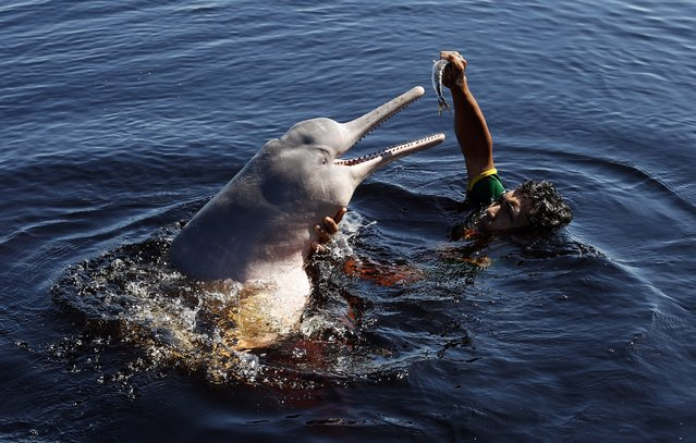 A Brazilian villager plays with an Amazon river dolphin, or pink dolphin, in Rio Negro, Amazon, some 35km northwest of Manaus, Brazil, 15 June 2014.  Manaus will host the FIFA World Cup 2014 group A preliminary round match between Cameroon and Croatia on 18 June 2014. (Photo by Mast Irham/EPA)