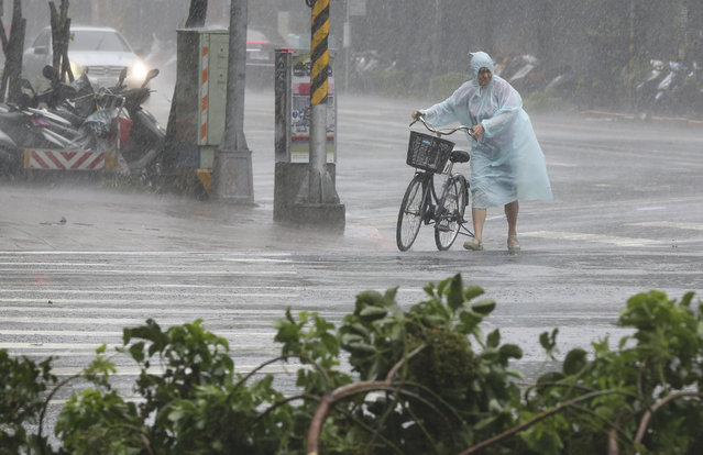 Behind fallen trees, a man braves the strong winds from Typhoon Soudelor with his bicycle in Taipei, Taiwan, Saturday, August 8, 2015. (Photo by Wally Santana/AP Photo)