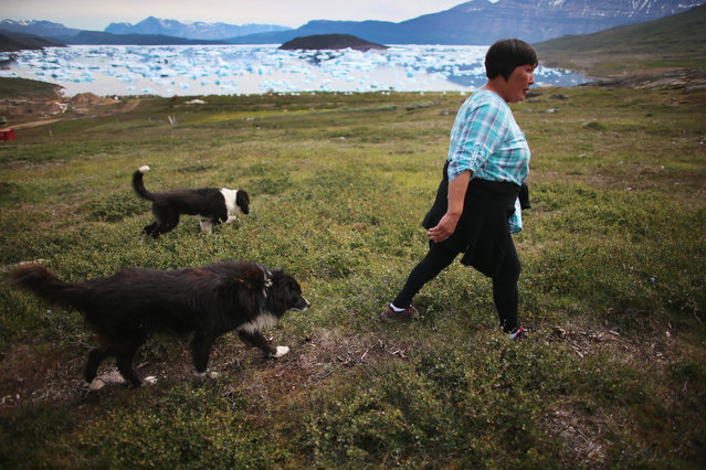 Arnaq Egede walks to the potato field on her family's farm on July 31, 2013 in Qaqortoq, Greenland. The farm, the largest in Greenland, has seen an extended crop growing season due to climate change. (Photo by Joe Raedle/Getty Images)
