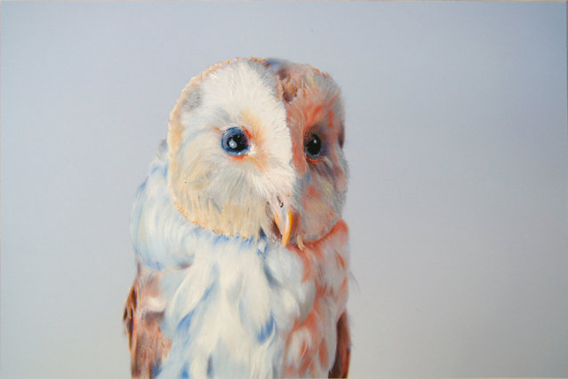 Colored Owl Drawings by John Pusateri