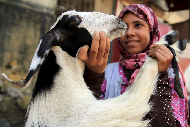 """A girl plays with goat at an old cattle market named """"Al Emam Market"""" ahead of the Muslim sacrificial festival Eid al-Adha in Cairo, Egypt, September 19, 2015. (Photo by Amr Abdallah Dalsh/Reuters)"""