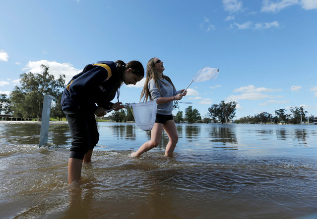Local residents Nadia Hartwig (L) and Jessica Todd fish with nets in the overflowing Forbes Lake after heavy rain created a declared natural disaster zone in the midwestern New South Wales town of Forbes, Australia, September 27, 2016. (Photo by Jason Reed/Reuters)