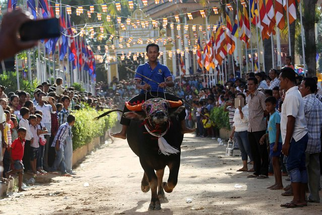 A Cambodian villager rides a buffalo during the Pchum Ben festival, the festival of death, at Vihear Suor village in Kandal province on October 1, 2016. Thousands of Cambodians descended on the small village northeast of the capital on October 1 to cheer on the annual water buffalo race that marks the end of the 15-day festival for the dead. (Photo by Chor Sokunthea/AFP Photo)