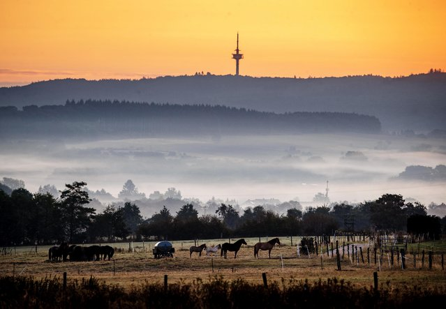 Horses stand in a paddock just before the sun rises in Wehrheim near Frankfurt, Germany, on a foggy Wednesday, August 19, 2020. (Photo by Michael Probst/AP Photo)