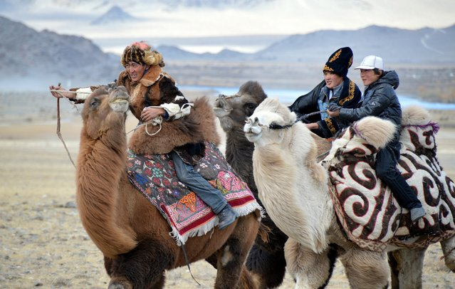 The camel race in the games at the Eagle Hunting Festival in Olgiy, Mongolia. (Photo by Brad Ruoho/The Star Tribune)
