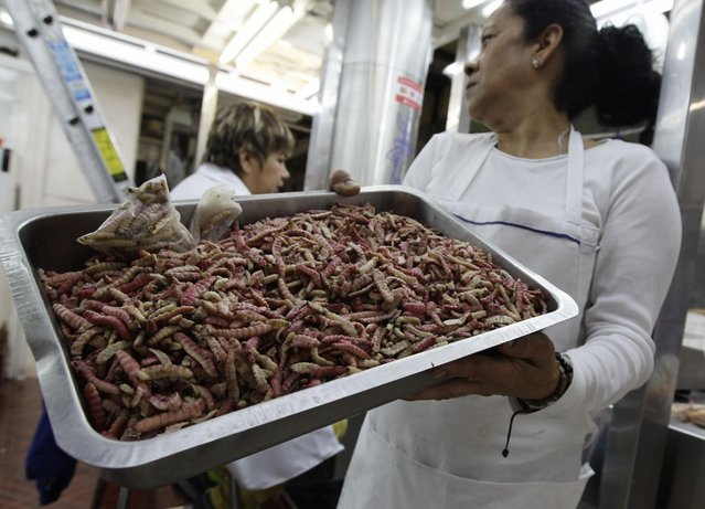 A woman holds a tray of maguey worms at the San Juan food market in Mexico City June 19, 2013. Mexico's taste for eating creepy crawlies, originating from the Pre-Columbian era, could be the answer to ending hunger. United Nations Food and Agricultural Organisation (FAO) is encouraging the production of edible insects to supplement diets in areas where malnutrition is rife and as a measure to combat obesity. Nowhere has the message been more warmly received than in Mexico where insects have been part of the diet for hundreds of years. Pre-Columbian civilizations in the country ate them frequently as a main source of protein because meat through cattle raising did not exist. Although conquistadors discouraged insect consumption, ethnic groups in the country continued to eat them. (Photo by Henry Romero/Reuters)