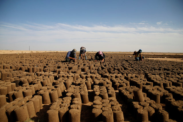Syrian refugees make biomass briquettes from olive pomace, a by-product of olive oil manufacture, which is an alternative to firewood, outside Zaatari refugee camp near the border with Syria, in Mafraq, Jordan October 16, 2016. (Photo by Ammar Awad/Reuters)