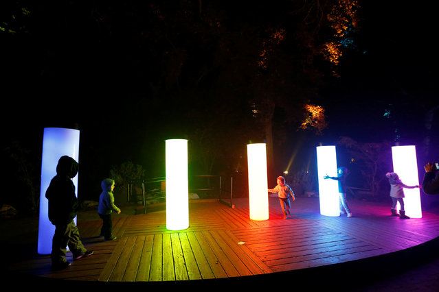 """Visitors interact with """"Rainbow Sycamores"""" which is part of the exhibit """"Enchanted: Forest of Light"""" at Descanso Gardens in La Canada Flintridge, California U.S., December 9, 2016. (Photo by Mario Anzuoni/Reuters)"""