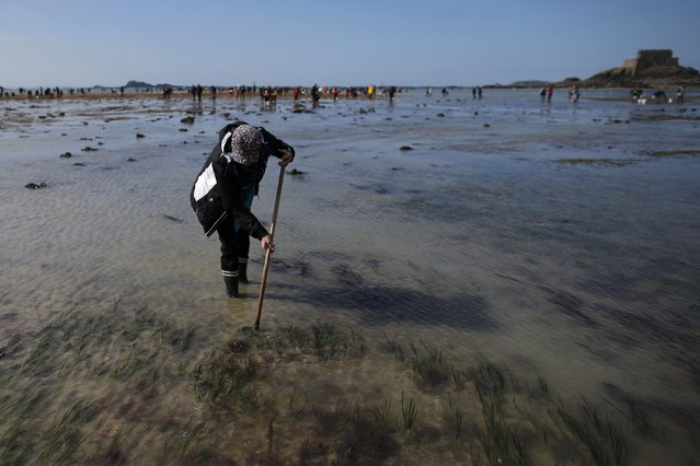A woman digs for shellfish during a record low tide in Saint Malo, western France, March 21, 2015. Towns on France's North Atlantic coast braced for their first giant tide of the millennium on Saturday as the full moon and this week's solar eclipse combined to create an ocean surge not seen since 1997. (Photo by Stephane Mahe/Reuters)