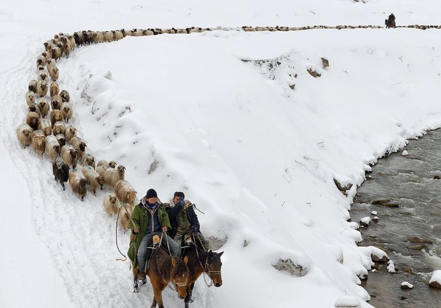 Kazakhs herd their sheep in Yili, Xinjiang Uighur Autonomous Region March 12, 2015. (Photo by Reuters/China Daily)