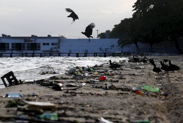 Vultures gather to eat waste in Bica beach, on the banks of the Guanabara Bay, with the Sugar Loaf mountain in background, 500 days ahead the Rio 2016 Olympic Games in Rio de Janeiro March 24, 2015. (Photo by Ricardo Moraes/Reuters)