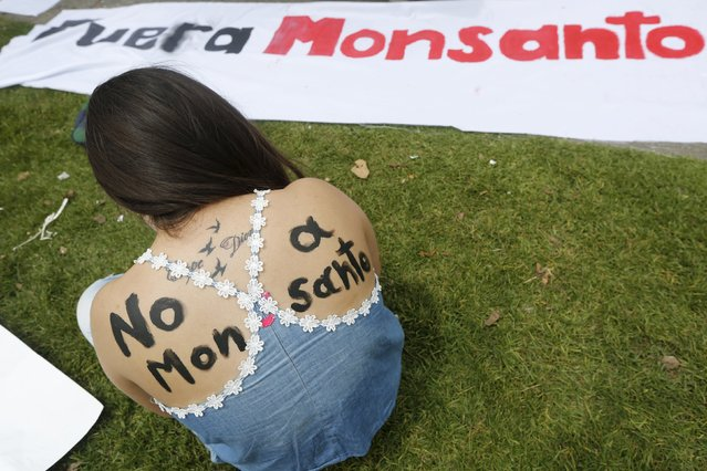 Demonstrator take part during a protest against Monsanto Co, the world's largest seed company in Bogota May 23, 2015. Similar demonstrations were organised around the world on Saturday to raise awareness to what the activists claim are dangers surrounding Monsanto's glyphosate-containing herbicide Roundup. (Photo by John Vizcaino/Reuters)