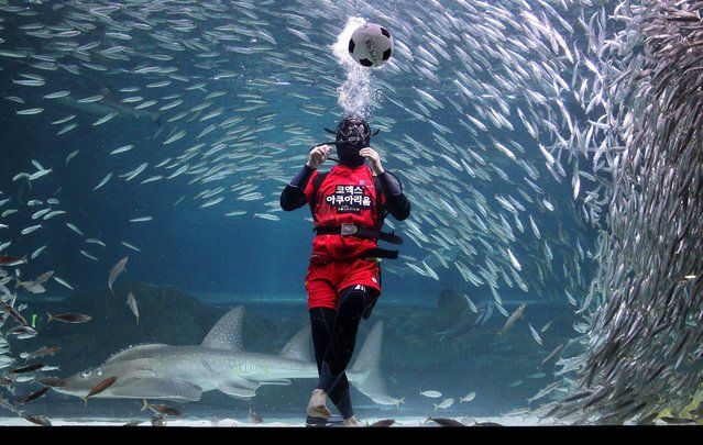 A diver clad in a soccer uniform swims with sardines in support of South Korean's success in the 2014 FIFA World Cup, at the Coex Aquarium in Seoul, June 9, 2014. (Photo by Chung Sung-Jun/Getty Images)