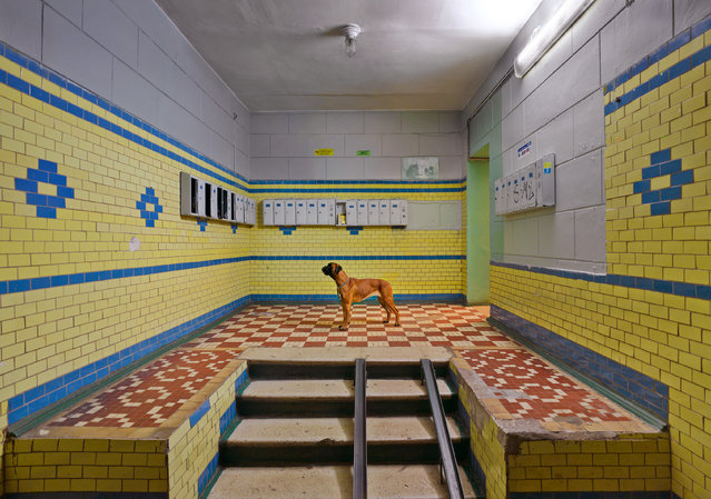 A lonely dog watches the mailboxes in a typical Moscow residential block. (Photo by by Frank Herfort/The Guardian)