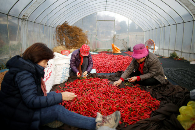 Women sort red peppers at the Tae Sung freedom village near the Military Demarcation Line (MDL), inside the demilitarised zone separating the two Koreas, in Paju, South Korea, November 22, 2016. (Photo by Kim Hong-Ji/Reuters)