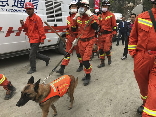 Rescuers with search dogs walk along a road near the site of a landslide in Xinmo village in Maoxian County in southwestern China's Sichuan Province, Sunday, June 25, 2017. (Photo by Ng Han Guan/AP Photo)