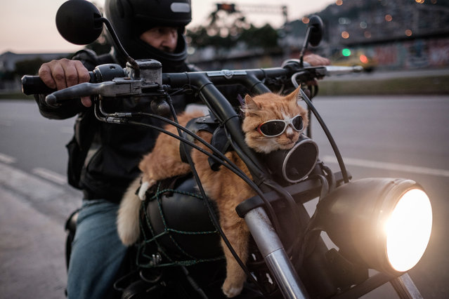 "A biker shows his 12-year-old cat ""Chiquinho"" – which always rides with him on his motorbike – in Rio de Janeiro, Brazil, on June 19, 2016. (Photo by Yasuyoshi Chiba/AFP Photo)"