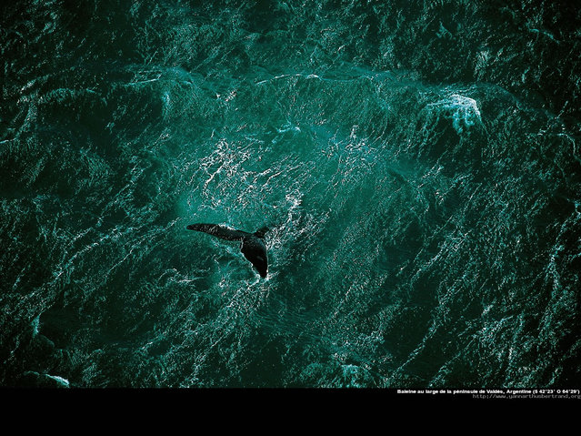 Amazing Photos by Yann Arthus-Bertrand. Part One