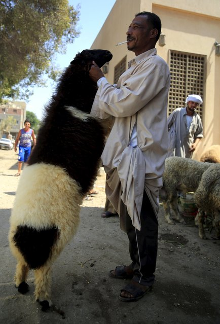"""A vendor carries a sheep after selling it to a customer at an old cattle market named """"Al Emam Market"""" ahead of the Muslim sacrificial festival Eid al-Adha in Cairo, Egypt, September 19, 2015. (Photo by Amr Abdallah Dalsh/Reuters)"""