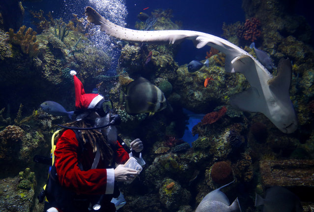 A diver dressed as Santa Claus feeds fish inside a fish tank at the Malta National Aquarium in Qawra, Malta, December 11, 2017. (Photo by Darrin Zammit Lupi/Reuters)