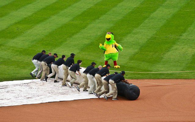 The Pittsburgh Pirates parrot mascot leads the grounds crew as they unroll the tarp before an exhibition spring training baseball game between the Boston Red Sox and the Pittsburgh Pirates in Bradenton, Florida, on March 18, 2013. (Photo by Carlos Osorio/Palm Beach Post)