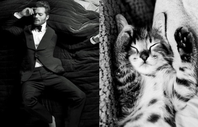 Hot Guys and Cats Striking Part4