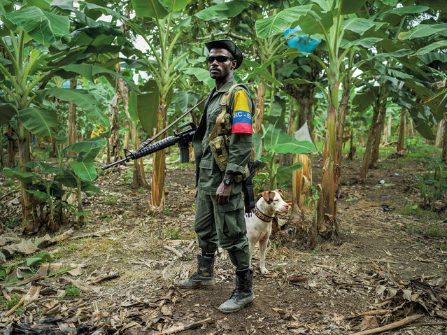 The Farc guerrilla fighter Over and the dog Killer pose for a portrait while standing guard. In the past, he would sometimes be fighting every day for half a year. At other times three months could go by without a shot being fired. As part of the peace process, soldiers like Over have moved into UN-controlled areas known as 'normalisation zones' where former soldiers stay in camps to receive training to prepare them for civilian life. The peace process is far behind schedule, houses that should have been ready months ago are still under construction, so former fighters are living in tents. (Photo by Mads Nissen/Politiken/The Guardian/Panos Pictures)