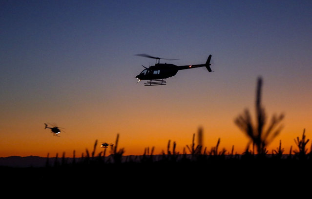 Helicopters fly over a corn field outside of Pahokee, Fla., before dawn Friday, February 20, 2015, in an attempt to keep the crops from freezing. The helicopters can force warm air down, displacing the colder air at ground level and raising the air temperature several degrees. (Photo by Lannis Waters/AP Photo/The Palm Beach Post)