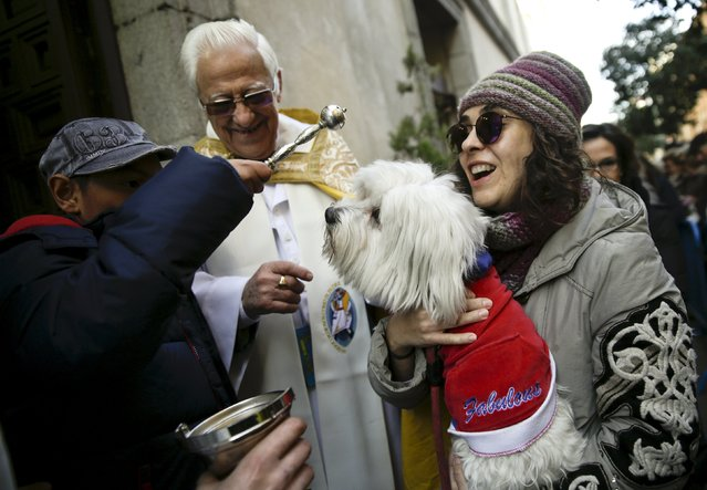 A dog reacts as it is blessed outside San Anton Church in Madrid, Spain, January 17, 2016. (Photo by Andrea Comas/Reuters)