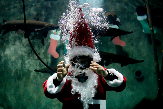 Biologist Octavio Nuno disguised as Santa Claus swims in a pool with Catan fish (Lepisosteus osseus), at the Guadalajara zoo's aquarium, in Guadalajara, Mexico, on December 8, 2018. The zoo offers the show during the Christmas season. (Photo by Ulises Ruiz/AFP Photo)