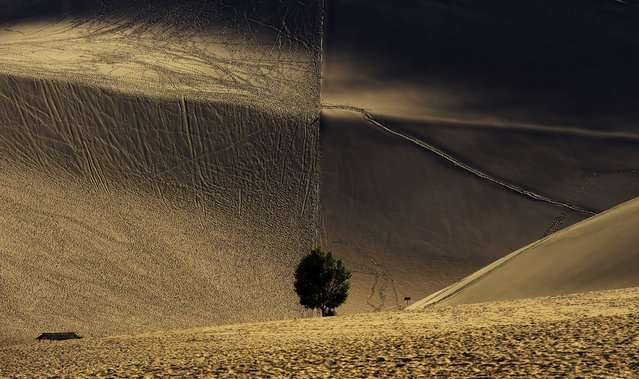 """""""The Quiet Desert"""". The situation of the desert on left side of this picture was made by footprints of tourists shapes sharply contrast with those on right side in which do not allowed visitors to enter in order to protect the Crescent Spring. Photo location: Dunhuang, Gansu Province, China. (Photo and caption by Kate Xiao/National Geographic Photo Contest)"""