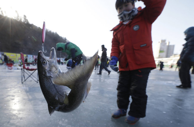 A boy catches a trout while ice fishing on a frozen river during a fishing contest in Hwacheon, South Korea, Saturday, January 14, 2017. (Photo by /Ahn Young-joon/AP Phot)