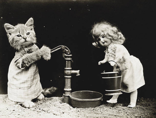 Photograph shows a kitten wearing clothes and pumping water for a doll, 1914. (Photo by Harry Whittier Frees/Library of Congress)