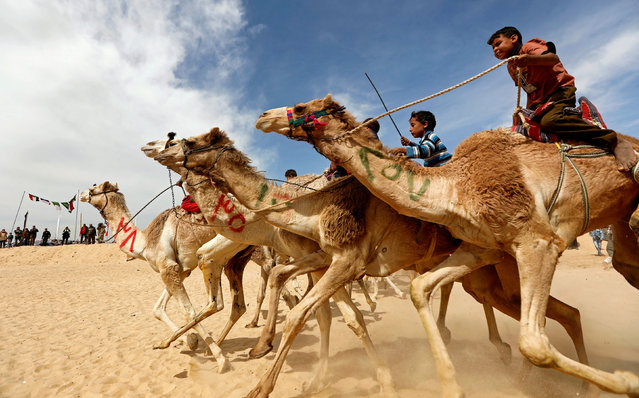 Jockeys, most of whom are children, compete on their mounts during the 18th International Camel Racing festival at the Sarabium desert in Ismailia, Egypt, March 12, 2019. Several Gulf countries have banned child jockeys from the traditional Bedouin sport after rights groups said the youngsters were often injured and some had been abducted or sold by their families. (Photo by Amr Abdallah Dalsh/Reuters)
