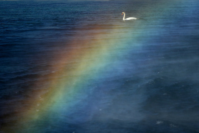 A swan is pictured through a rainbow created by the water falling from the Jet d'Eau water fountain in Geneva, Switzerland, March 22, 2019. (Photo by Denis Balibouse/Reuters)