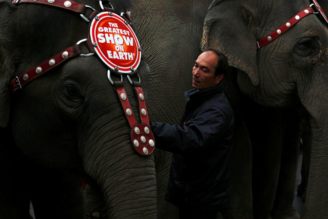 """Senior Elephant Handler Alex Petrov prepares an elephant for a performance at Ringling Bros and Barnum & Bailey Circus' """"Circus Extreme"""" show at the Mohegan Sun Arena at Casey Plaza in Wilkes-Barre, Pennsylvania, U.S., April 29, 2016. (Photo by Andrew Kelly/Reuters)"""