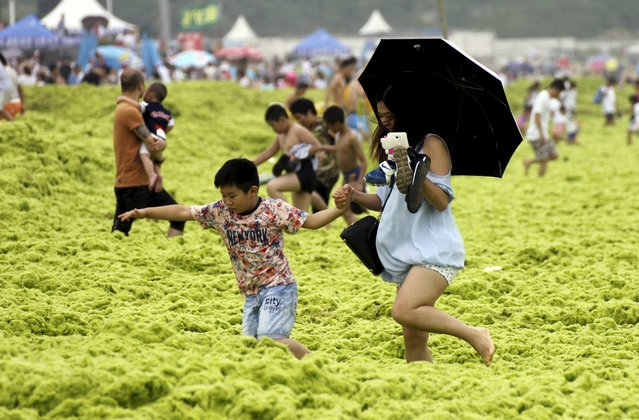 People make their way on an algae-covered beach in Qingdao, Shandong province, China, July 19, 2015. (Photo by Reuters/Stringer)
