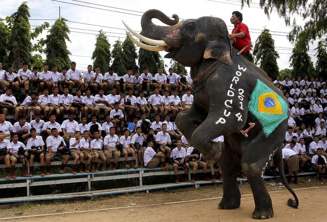 A Thai mahout guides his elephant to entertain schoolchildren during the break at a soccer match between men and elephants to celebrate the 2014 FIFA World Cup Brazil in Ayutthaya province, central Thailand, June 9, 2014. (Photo by Apichart Weerawong/Associated Press)
