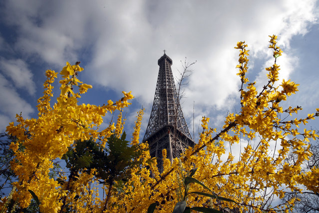 The Eiffel Tower rises from behind blossoming flowers and trees on a Spring day, in Paris, France, Tuesday, March 14, 2017. (Photo by Christophe Ena/AP Photo)