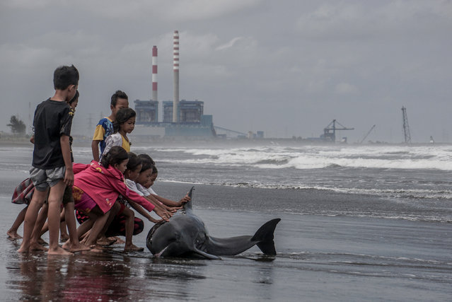 Children try to push an injured and weak dolphin back into the water after it washed ashore during bad weather and high tide on a beach in Cilacap, Central Java, Indonesia August 12, 2016 in this photo taken by Antara Foto. (Photo by Idhad Zakaria/Reuters/Antara Foto)