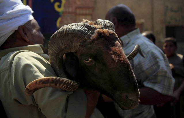 """A vendor (L) carries a ram after selling it to a customer at an old cattle market named """"Al Emam Market"""" ahead of the Muslim sacrificial festival Eid al-Adha in Cairo, Egypt, September 19, 2015. (Photo by Amr Abdallah Dalsh/Reuters)"""