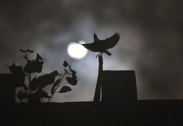 A crow sits on roof of a house as the sun forms crescent during solar eclipse in New Delhi, India, Sunday, June 21, 2020. (Photo by Manish Swarup/AP Photo)