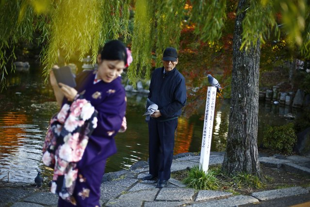 A man feed pigeons as he stands next to a woman, dressed in a traditional Japanese kimono, in a park in Kyoto, western Japan November 19, 2014. (Photo by Thomas Peter/Reuters)